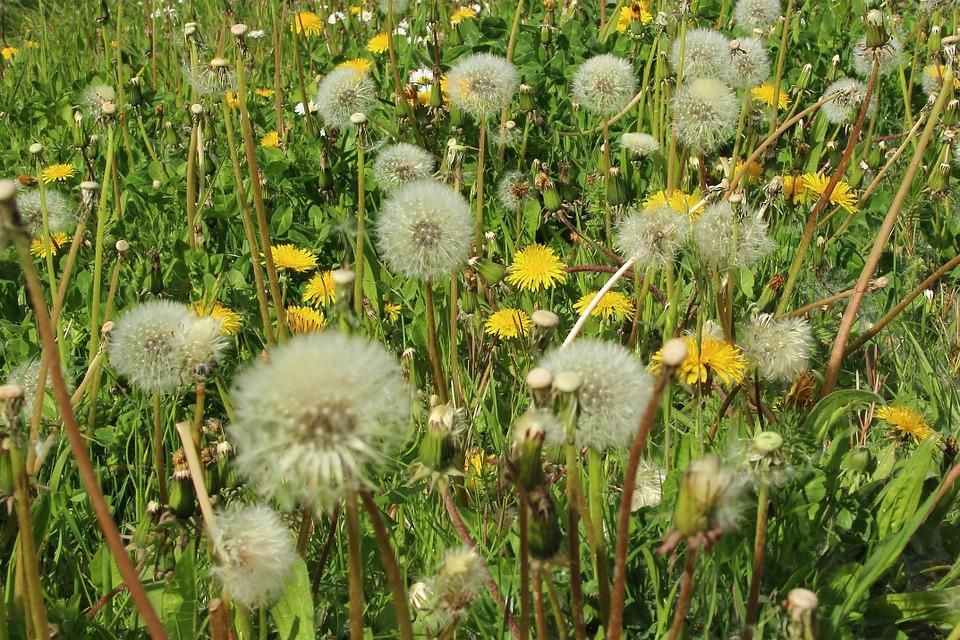 Spring Pollen Barrage